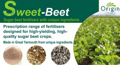 Beet review