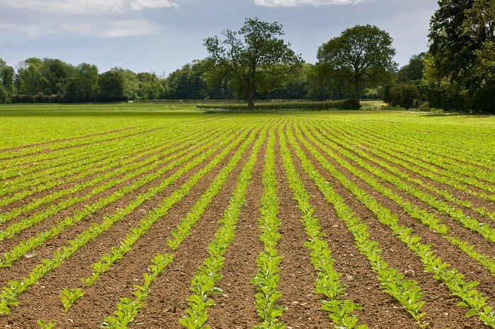 Eu Levy Refund Secured For British Beet Sugar Industry News