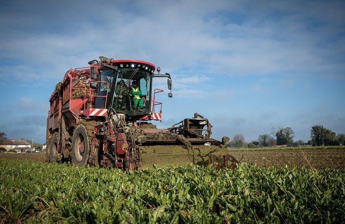 British Sugar And Nfu Sugar Announce The 2019 Sugar Beet Contract