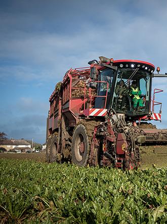 Harvesting sugar beet