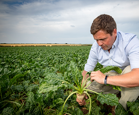 Sustainability - Farmer, Harvester and Sugar Beet