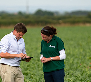 Man and woman in field with sugar beet